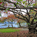 Gnarly Trees Of South Hilo Bay - Hawaii by Daniel Hagerman