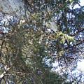 Go Climb A Tree by Maggie Cruser