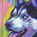 Go Husky by Lea S