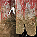 Goat And Old Barn Door by Susan Leggett