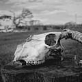 Goat Skull by Ulisse Bart