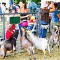 Goats At County Fair by Jeelan Clark