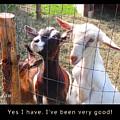 Goats Poster by Felipe Adan Lerma
