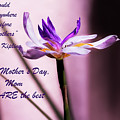 God Could Not Be Everywhere And Therefore He Made Mothers by Kay Brewer
