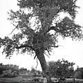 Goddess Tree 2 by Matthew Angelo