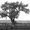 Goddess Tree 3 by Matthew Angelo