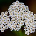Gods Bridal Bouquet by John Haldane