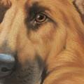 Goggie Shepherd by Karen Coombes
