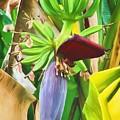 Going Bananas  by Richard Rizzo