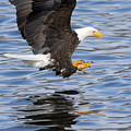 Going For The Kill by Larry Ricker