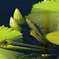 Going Green by Cindy Manero