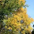Gold And Green by Mesa Teresita