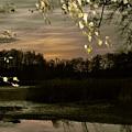 Golden Autumn by Steffen Krahl
