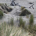 Gold Beach Oregon Beach Grass 15 by Lydia Miller