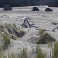 Gold Beach Oregon Beach Grass 18 by Lydia Miller