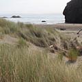 Gold Beach Oregon Beach Grass 24 by Lydia Miller