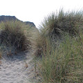 Gold Beach Oregon Beach Grass 5 by Lydia Miller