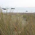 Gold Beach Oregon Beach Grass 7 by Lydia Miller