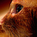 Gold Cat Profile by Diane Parnell