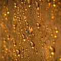 Gold Drops by Lyudmila Prokopenko