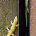 Gold Dusted Day Gecko by Jennifer Robin