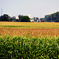 Gold Field by Don Baker