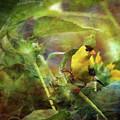 Gold Finch 4403 Idp_2 by Steven Ward