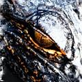 Gold Gator Eye by Sheri McLeroy