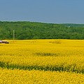 Gold Green And Blue by Bill Willemsen