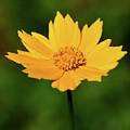 Gold In The Garden by Ann Keisling