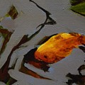 Gold In The Pond by Catherine Robertson