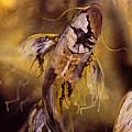 Gold Koi by Karoly Grof