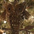 Gold Owl by Susan Brown