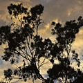 Gold Sunset Tree Silhouette I by Linda Brody