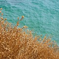 Gold Thistles And The Aegean Sea by Clay Cofer