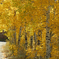 Golden Aspen by Heather Coen