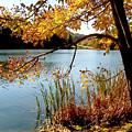 Golden Autumn Lake by Karin Everhart