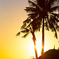 Golden Beach Tropics by James BO Insogna