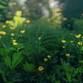 Golden Blooms by Gene Garnace