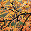 Golden Branch by Mary Haber