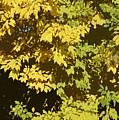 Golden Branches by Carol Lynch