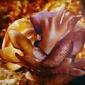 Golden Brown Wild Mushroom by Debra Lynch