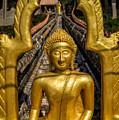Golden Buddhas by Adrian Evans
