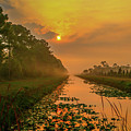 Golden Canal Morning by Tom Claud