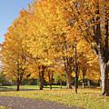 Golden Colors In Autumn Bellavista Park Oregon. by Gino Rigucci