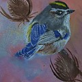 Golden-crowned Kinglet by Sandra Maddox