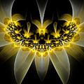 Golden Daffodils by Amorina Ashton