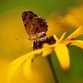 Golden Dreams Of A Summer Garden by Dorothy Lee