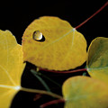 Golden Drop by Jerry McElroy