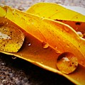 Golden Droplets by LKB Art and Photography